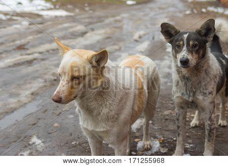 Street portrait of stray dog family (left-female right- male)