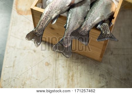 Tail Fins Of Fresh Trout Dangling From Wooden Box