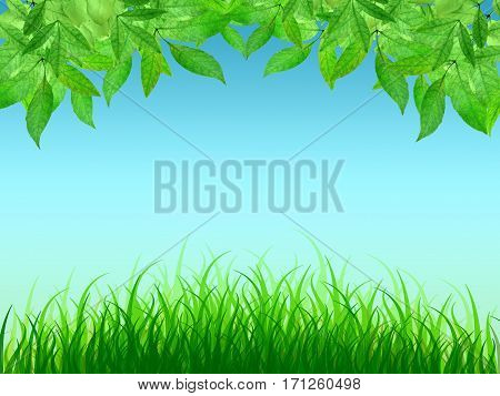 Young leaves and tender spring grass. Spring background. A warm sunny day. Natural clean background. Summer. Park. Morning.Close-up.
