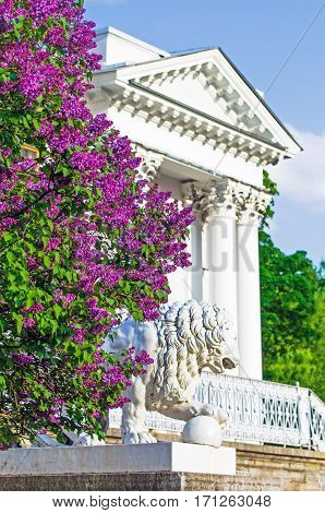 Lilac bushes building column palace porch stairs statue Lions park summer leaves flowers trees forest beauty