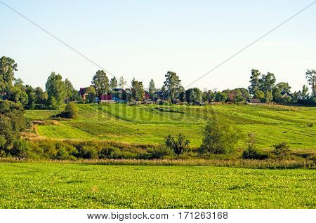 Field grass over grown flowers in summer