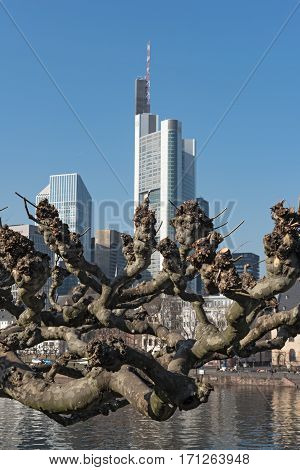 FRANKFURT, GERMANY-FEBRUARY 14, 2017: Branch of a Platanus in front of the Frankfurt skyline