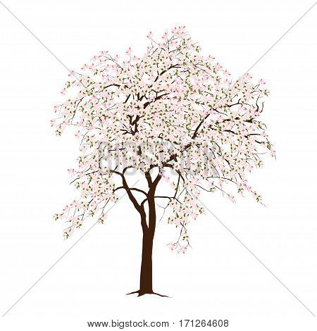 The blossoming apple-tree in the spring on a white background