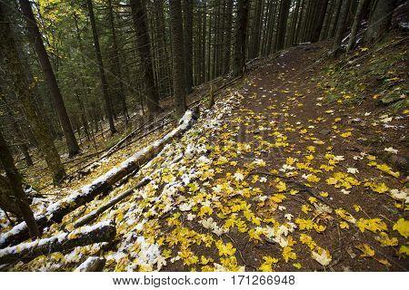 Passage in the autumnn mountains, Carpathians, Ukraine
