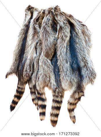 Several Natural Raccoon Pelts