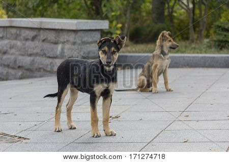 Two homeless puppy on a city street. Animals