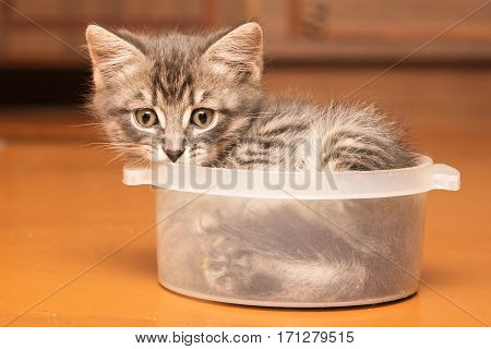 Playful kitten trying to climb in close pot.