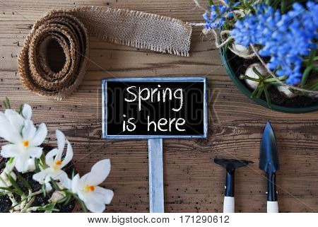 Sign With English Text Spring Is Here. Spring Flowers Like Grape Hyacinth And Crocus. Gardening Tools Like Rake And Shovel. Hemp Fabric Ribbon. Aged Wooden Background