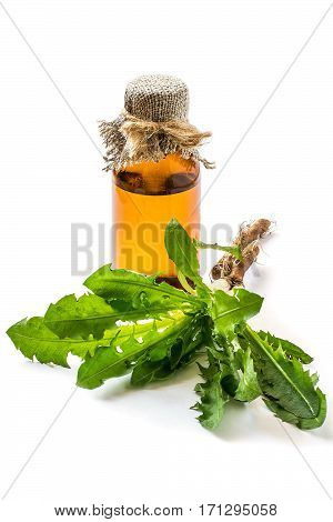 Medicinal plant dandelion (Taraxacum officinale). Dandelion leaves, roots and pharmaceutical bottle on a white background. It is used for herbal medicine and healthy food. Vertical
