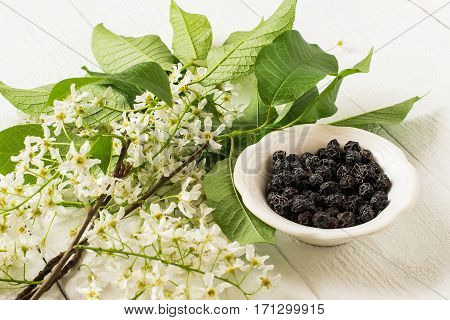 Medicinal plant bird cherry (Prunus padus). Flowering branches and dried berries in a bowl on a white wooden background. Selective focus