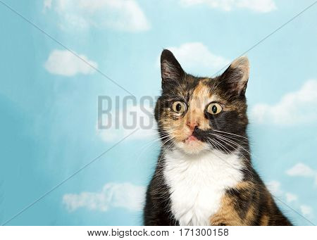 Portrait of one surprised looking calico cat looking forward slightly to viewers left. Blue background sky with clouds. Copy space.