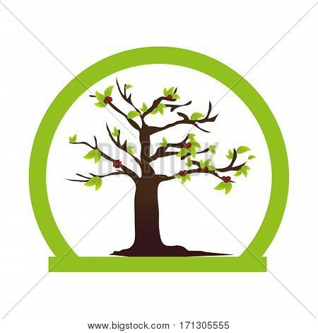 half circular border colorful with leafy tree plant vector illustration
