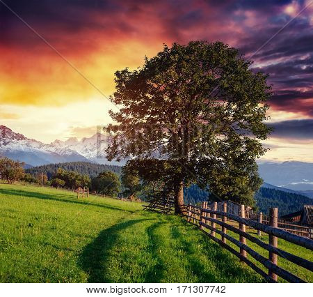 Wide Angle View of a Wooden Fence Under a Blue Sky with a Beautiful Meadow Blanketed with Wildflowers.