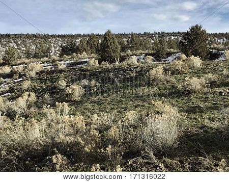Sagebrush, juniper trees, wild grasses, hills and snow show the rugged Central Oregon landscape in winter.