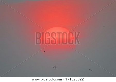 Beautiful Burry  Of Sunset With Flying Birds For Background