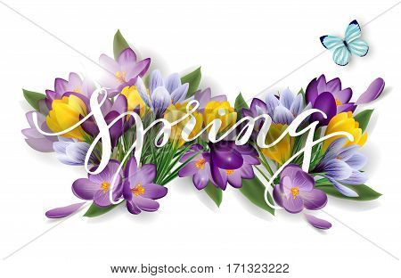 Word spring with flowers crocuses. Spring background concept. Vector template