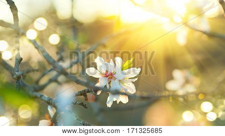 Spring Easter border or background art with blossom. Beautiful nature scene with blooming tree and sun flare. Sunny day. Spring flowers. Beautiful Orchard. Spring holidays background. Springtime