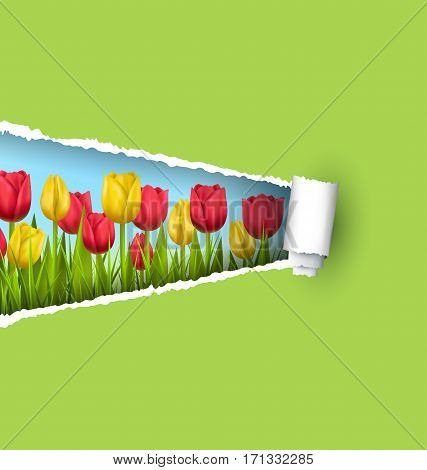 Green grass lawn with yellow and red tulips and ripped paper sheet isolated on green. Floral nature flower background