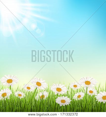Green grass lawn with white chamomiles and sunlight on sky background