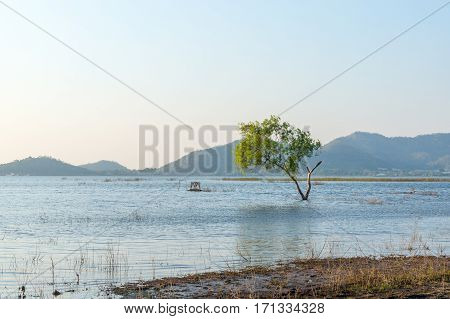 tree in water with mountain background at Bang Phra Reservoir SrirachaChonburi Thailand.