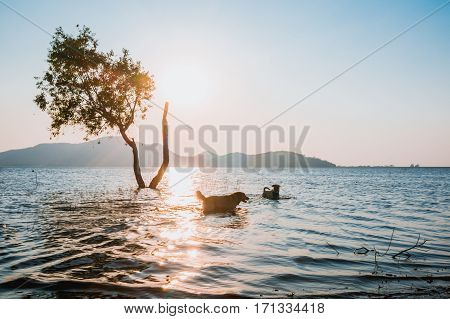 tree in water with blur of dog and mountain background at Bang Phra Reservoir SrirachaChonburi Thailand.
