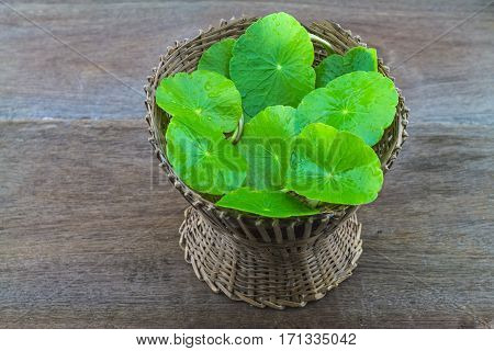Asiatic Pennywort (Centella asiatica ) in bamboo basket on wooden background