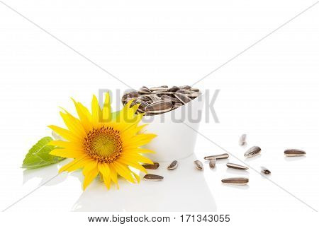 Sunflower blossom and sunflower seeds isolated on white background.