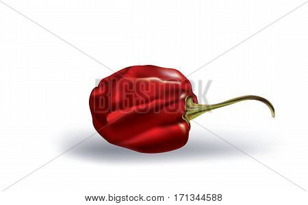 Habanero red hot pepper on white background