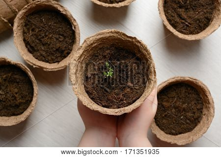 Children's Hands Hold A Pot Of Seedlings