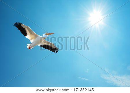 Beautiful tropical bird in flight against blue sky