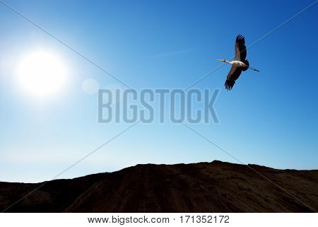 Beautiful tropical bird in flight against blue sky spring concept