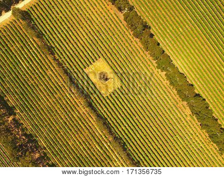 Aerial view of vineyard in Coonawarra region Australia featuring rows of grapes ands vines