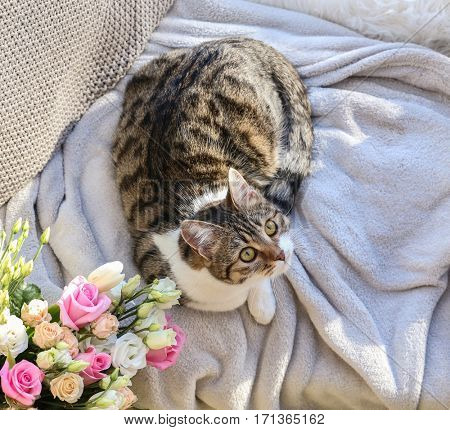 Cute funny cat lying on soft plaid at home