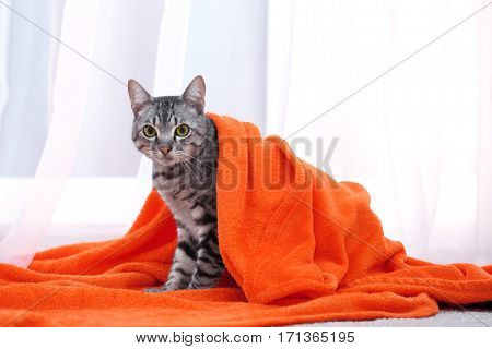 Cute funny cat under plaid at home