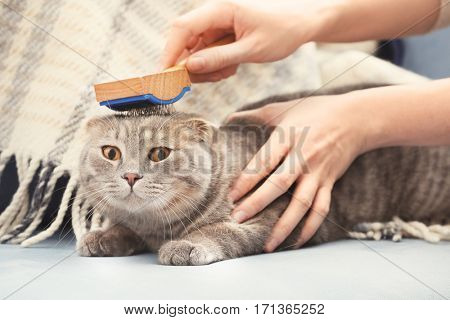 Owner brushing cute cat at home