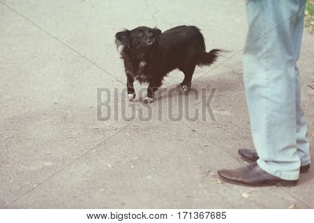 Man with stray dog  outdoors