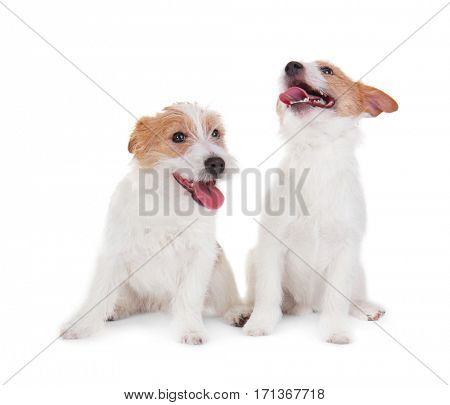 Cute funny dogs on white background