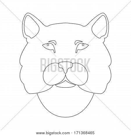 cougar head vector illustration  side front line