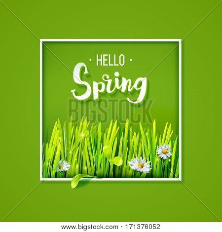 Hello Spring lettering with green grass and chamomile in frame on green background. Spring background. Design for banners, greeting cards, spring sales. Vector illustration