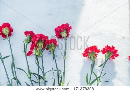 a few red carnations on snow in winter