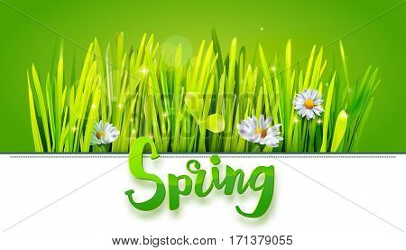 Spring lettering with green grass and chamomile on green background. Spring background. Design for banners, greeting cards, spring sales. Vector illustration