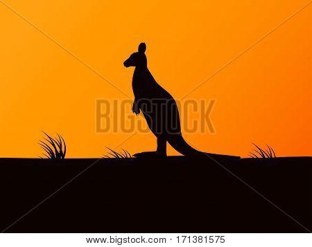 Vector illustration of black silhouette kangaroo on the background of sunset.