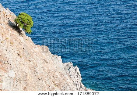 Lonely Tree On A Steep Cliff Over Sea