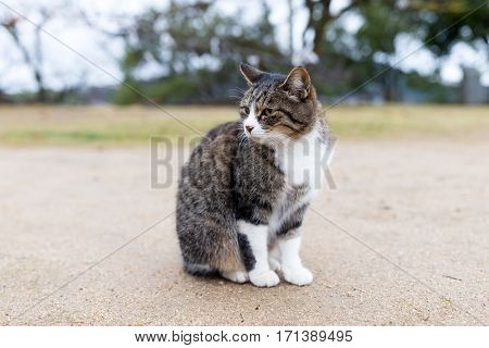 Cute Street cat sitting at outdoor
