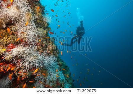 Young woman scuba diver exploring coral reef, Maldives atolls, Indian Ocean. Lot of beautiful colored small fish and soft coral on foreground