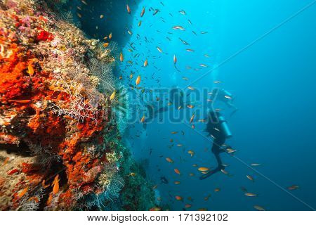 Group of scuba divers exploring coral reef, Maldives atolls, Indian Ocean. Lot of beautiful colored small fish and soft coral on foreground