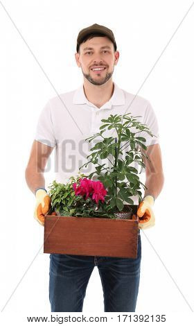 Male florist holding wooden box with house plants on white background
