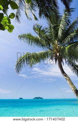 Coconut Getaway Under Trees