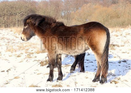 Apparently Six legged wild horse in the snow so funny