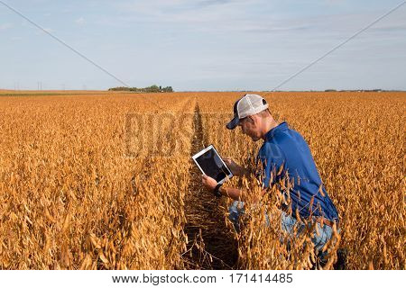 Farmer Inspecting Soybean Field